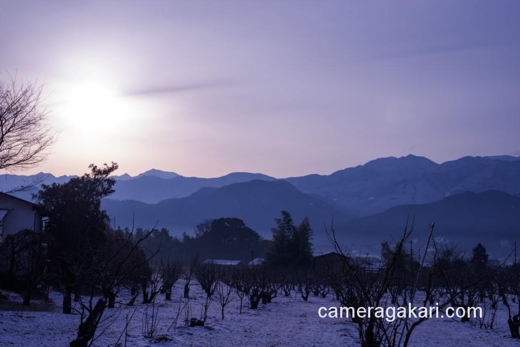 柿畑と朝日