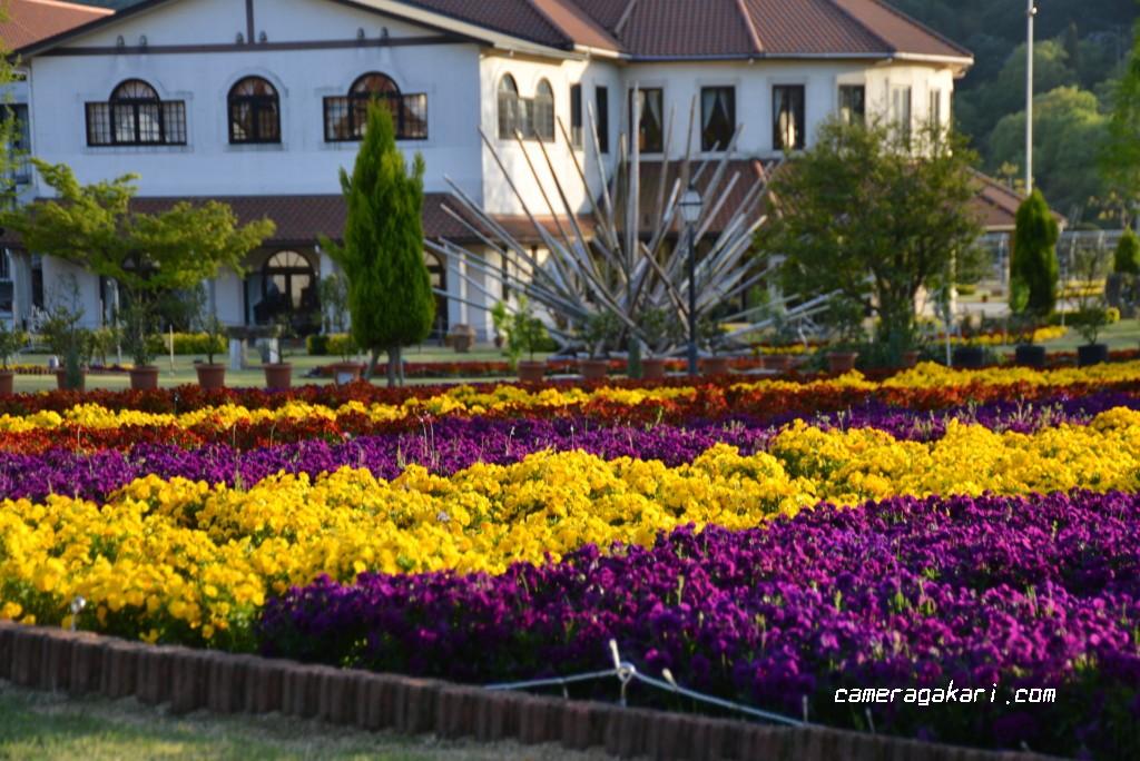 タオル美術館とお花畑