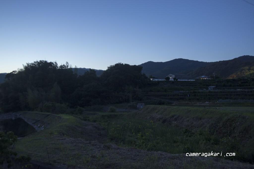 夕暮れのホタル撮影