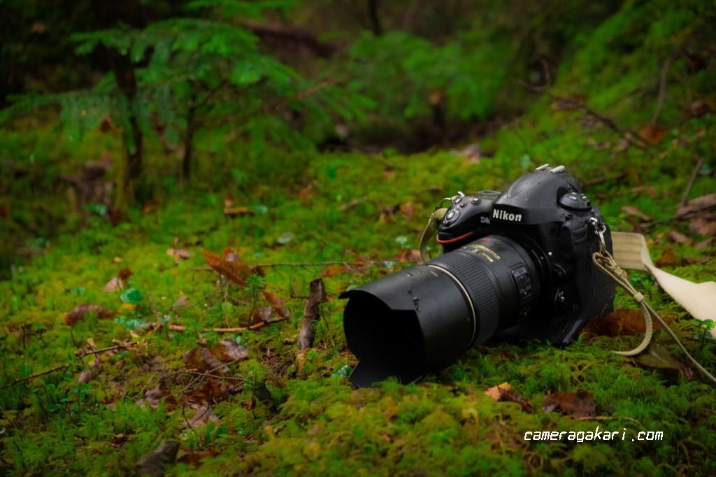 一眼レフカメラと自然