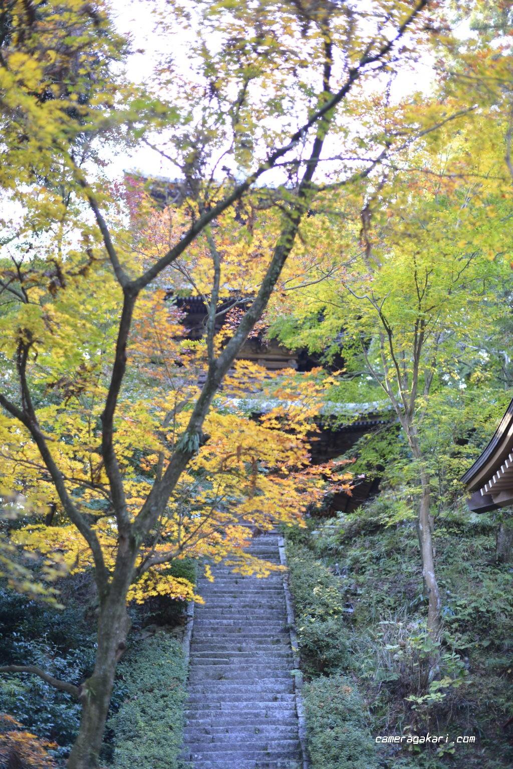 西山興隆寺 五重の塔