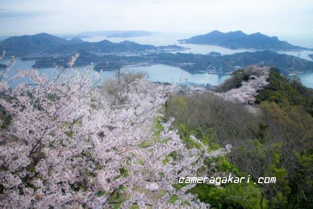 積善山 三千本桜