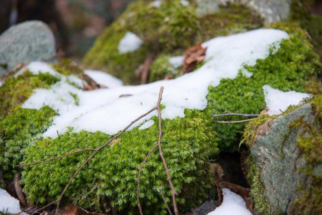 堂ヶ森 登山道 雪