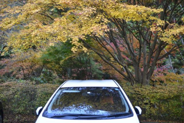 車に写る紅葉